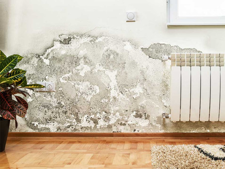 How Does Mold Affect Homes And Their Occupants?