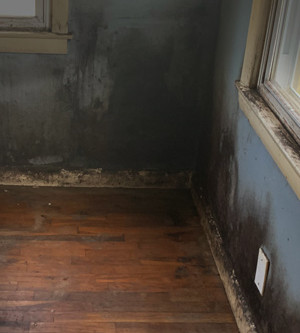 Mold: the 4 things to look for in your home