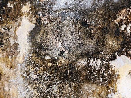 When should my home be tested for mold?