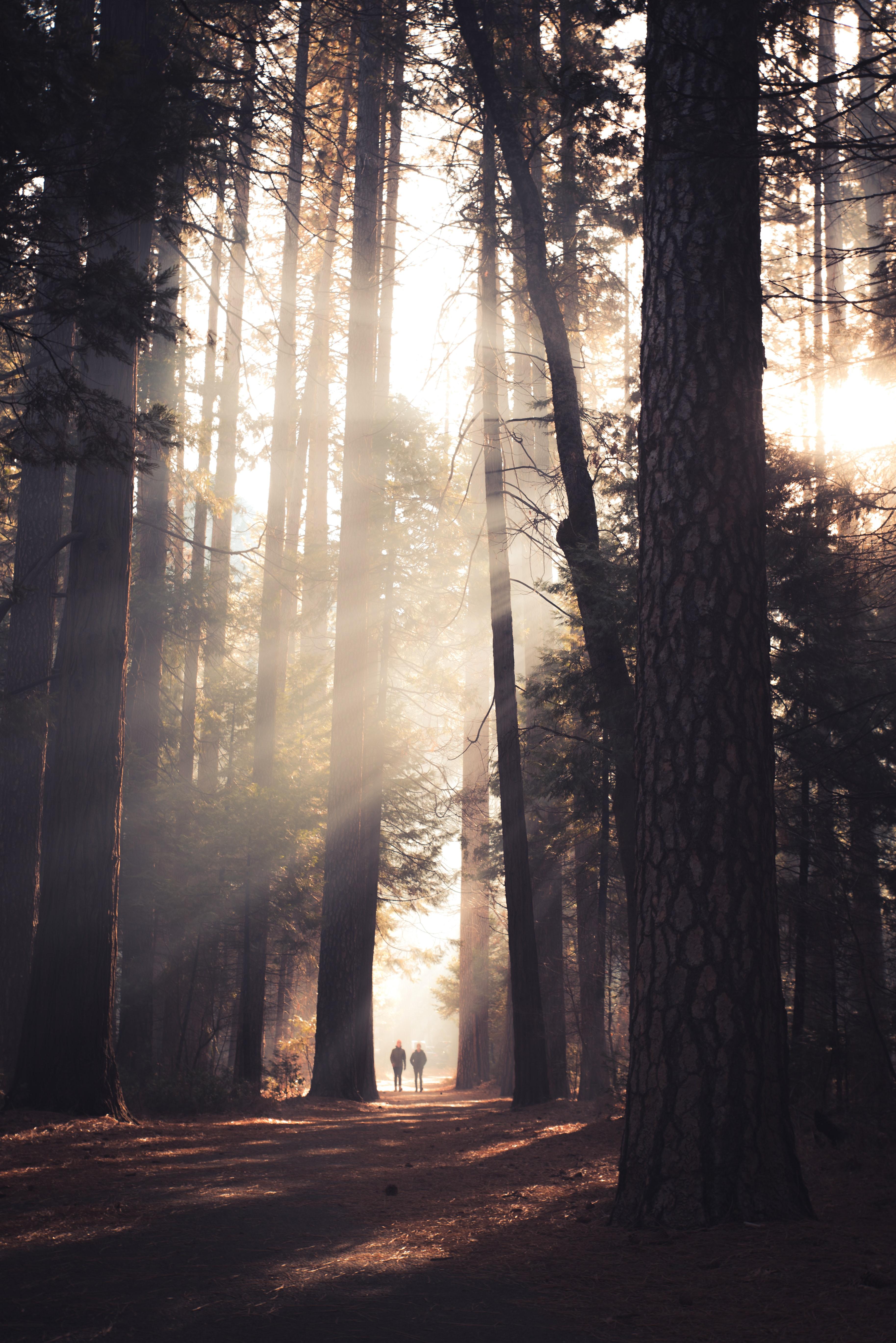 Forest Meditation Day ( Shirin - Yoko)