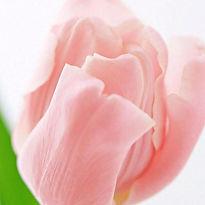 flower_ladies.jpg
