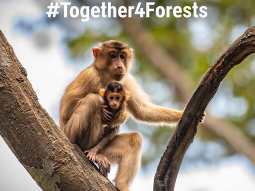Firma la petizione per fermare la deforestazione
