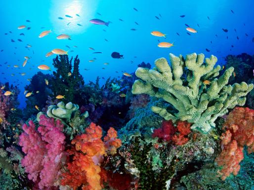 Scienza in pillole: foresta amazzonica, coralli e mondi virtuali