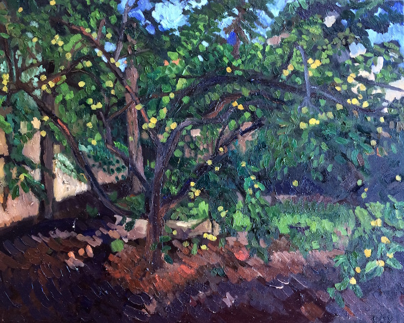 Lemon Tree ||