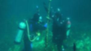 rescue diver course on Catalina