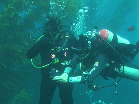 Everything you need to know about learning to scuba dive on Catalina Island