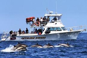 snuba on Catalina Island