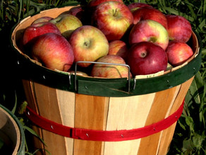 Does one bad apple spoil the whole barrel or can a barrel of good apples support a bruised one?