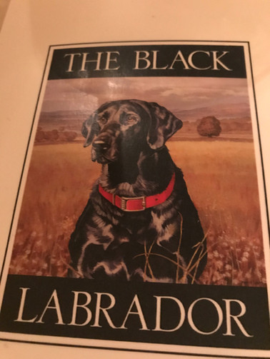 The Black Labrador of HTX