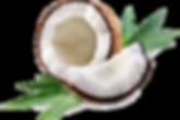 Conconut.png
