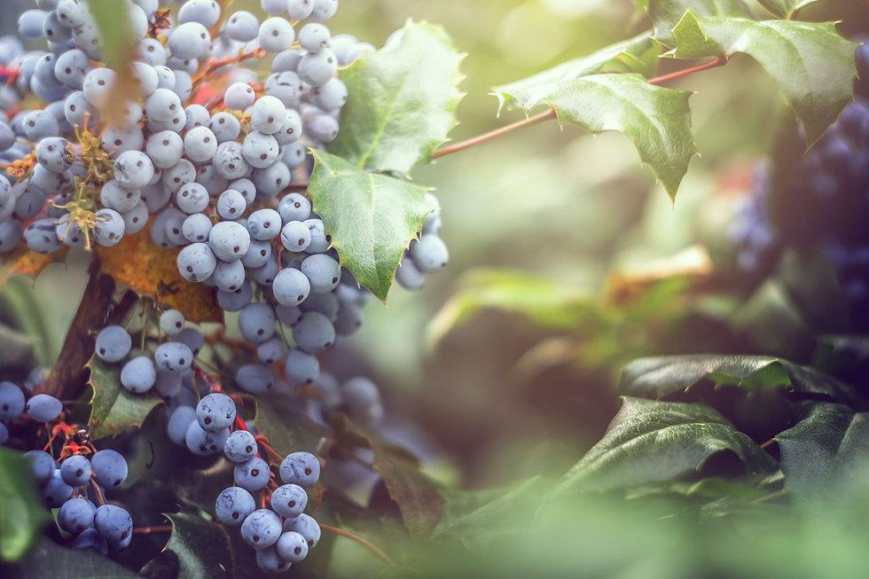 Riekert-Botha-vineyard.jpg