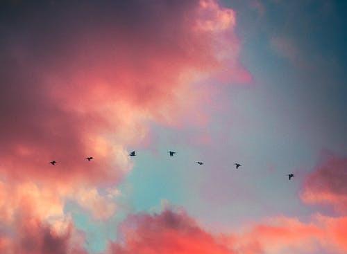 Pippa Botha - Birds and custodians
