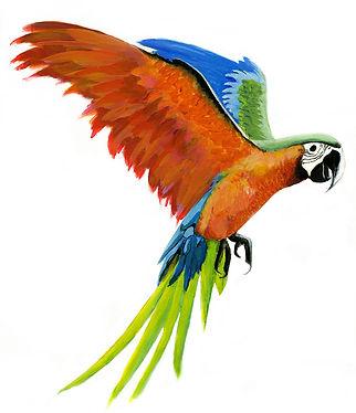 pappagallo volante2.jpg