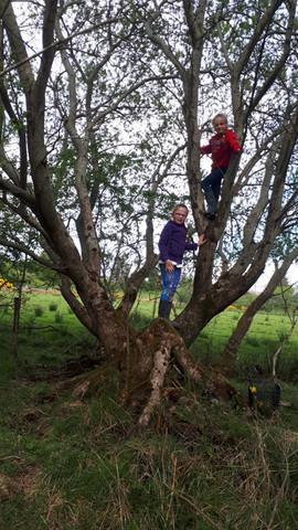 Anna and Leah climbing a tree.jpg