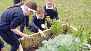 DAY OF ACTION FOR GREEN SCHOOLS