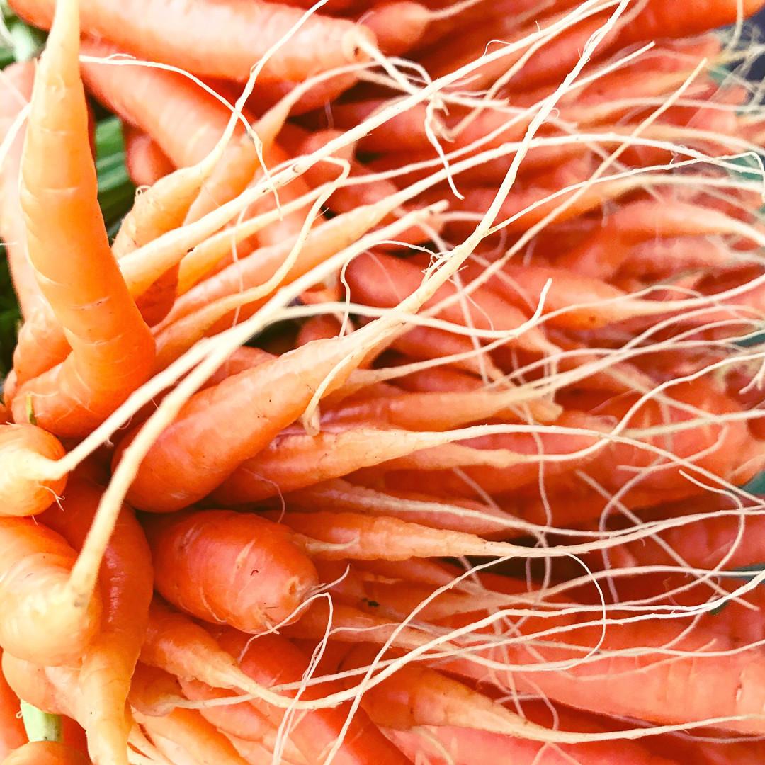 carrottips.JPG