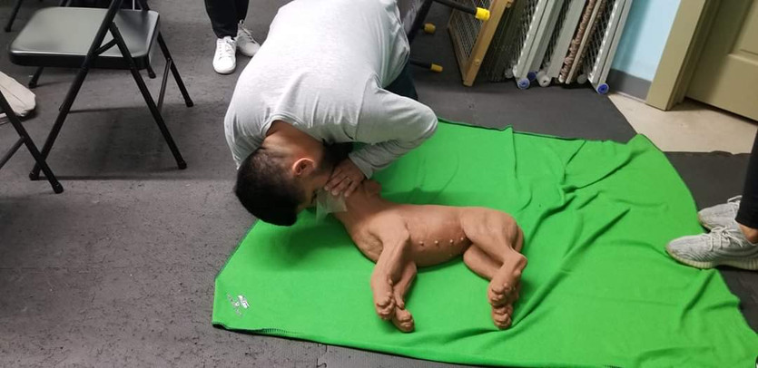 Joseph performs rescue breaths on dog mannequin