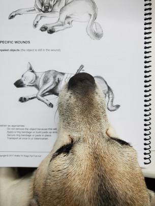 Jack studies the manual