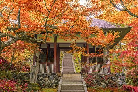 jojakko-temple-kyoto-PQPEJNM.jpg