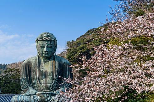 buddha-statue-and-cherry-blossoms-kamaku