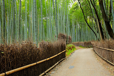 road-in-bamboo-forest-7737LRG.jpg