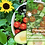 Thumbnail: 7-Daagse Plant-Warrior Challenge summer/autumn edition