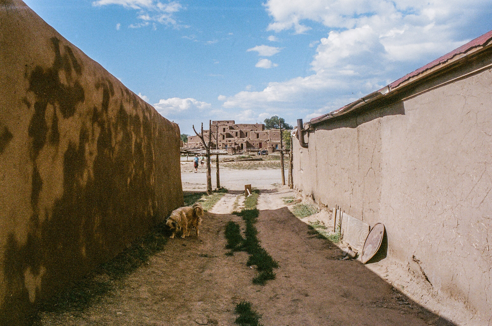 Pueblo Dog 1