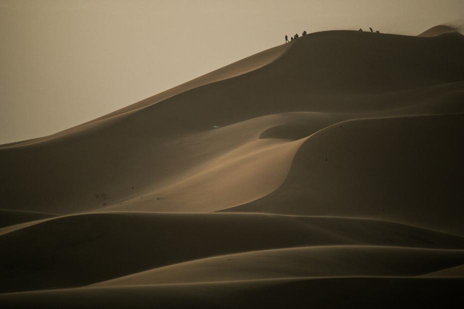 dune bugs