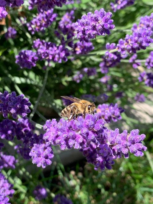 Aromaspray Lavendel