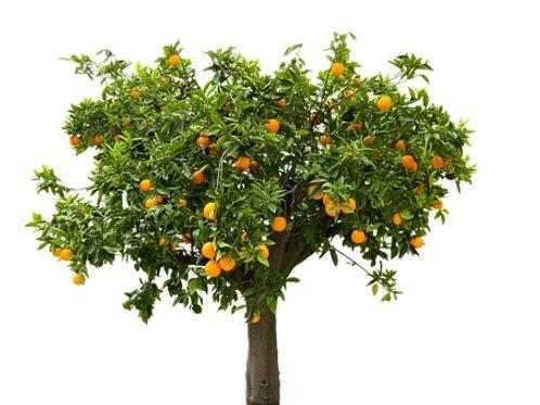 Aromaspray Orange