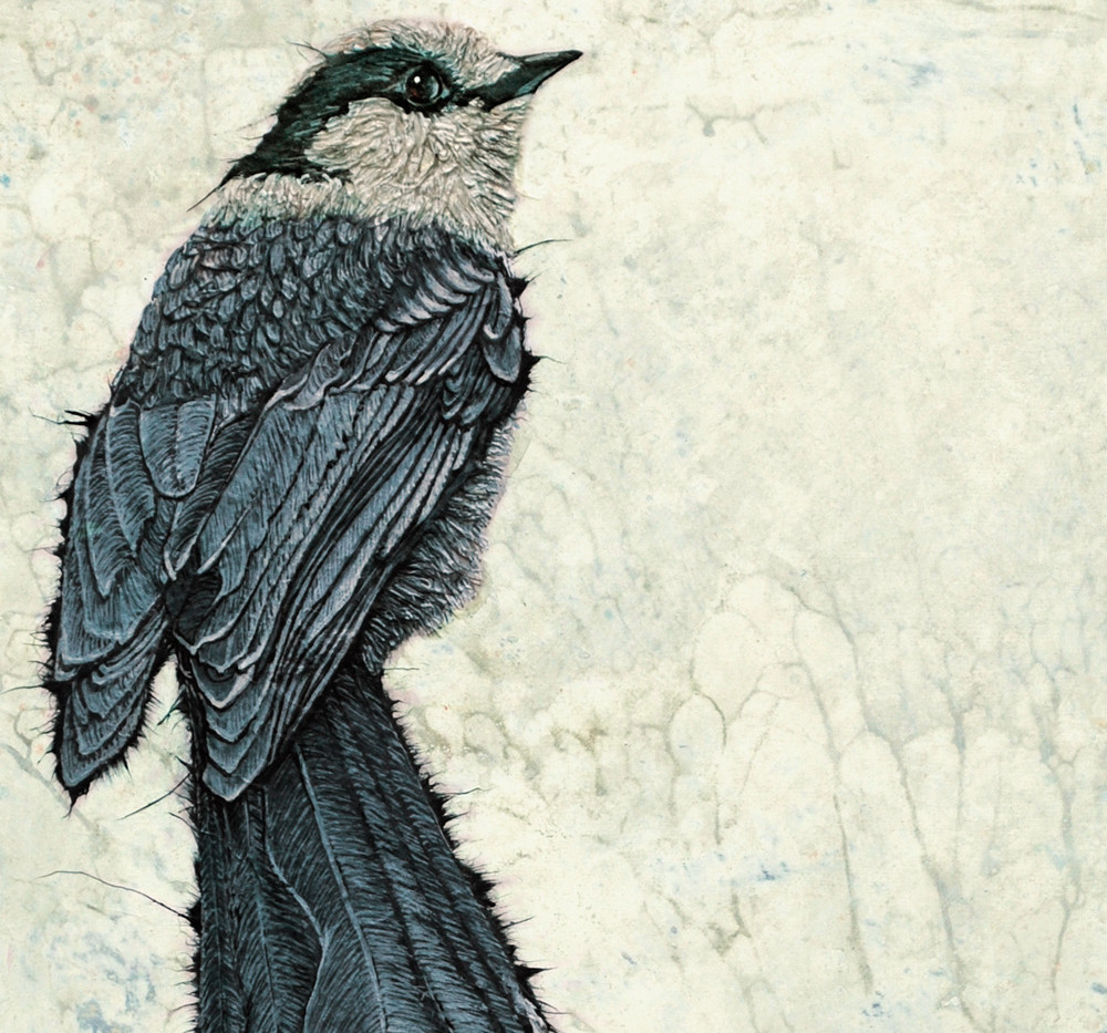 Canadian Jay (diptych, detail)