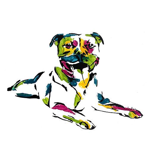 Boris the Staffordshire Terrier
