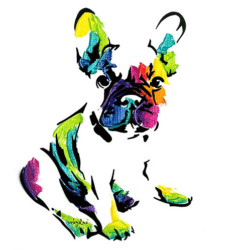 Sacha Maree the French Bull Dog