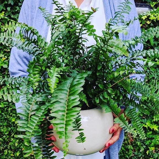 Plantas Recomendadas Maceta Bola