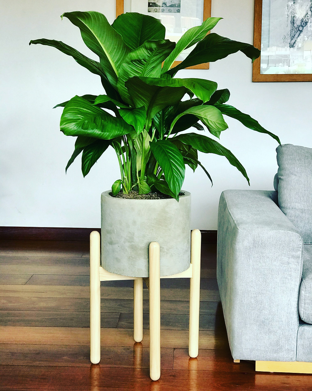 Stand Anna con Spathiphyllum