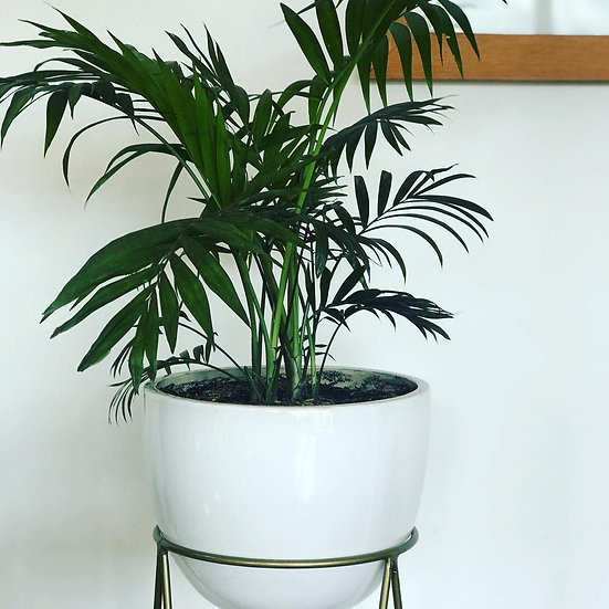 Plantas Maceta Bowl, Lillium y Diamante