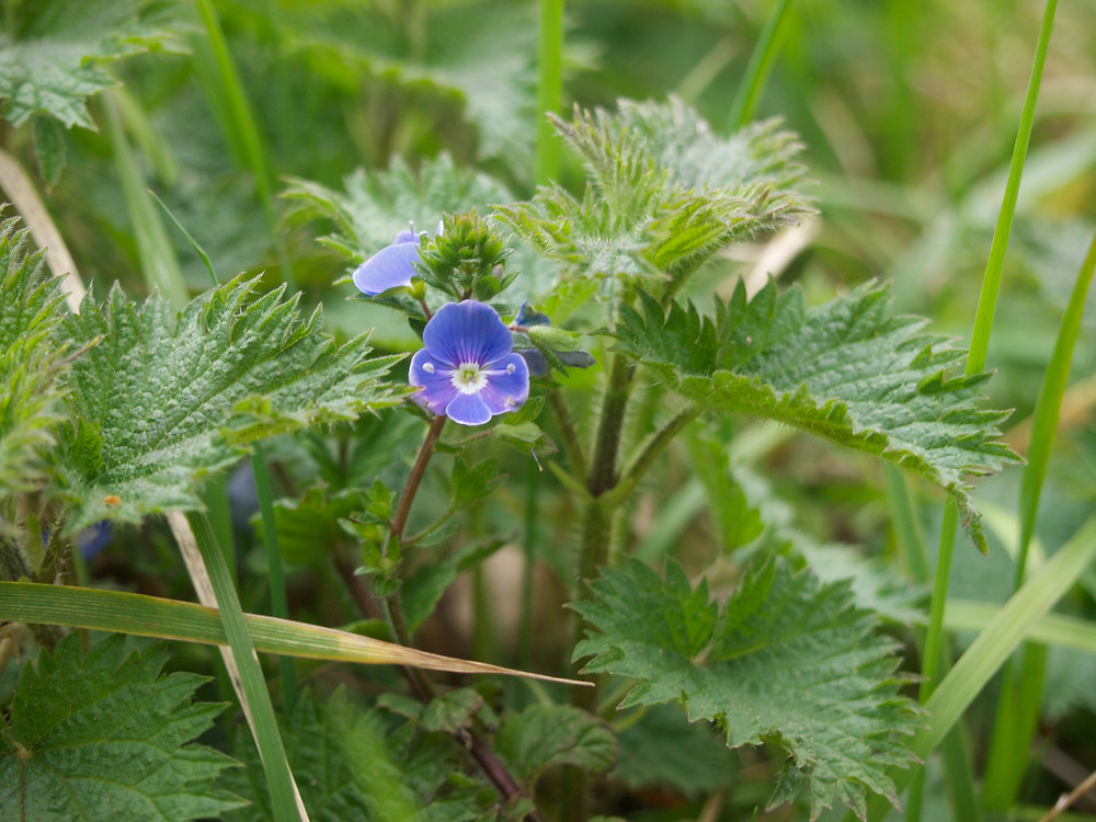 flowers of ireland, photos of flowers, columbia hillen photography