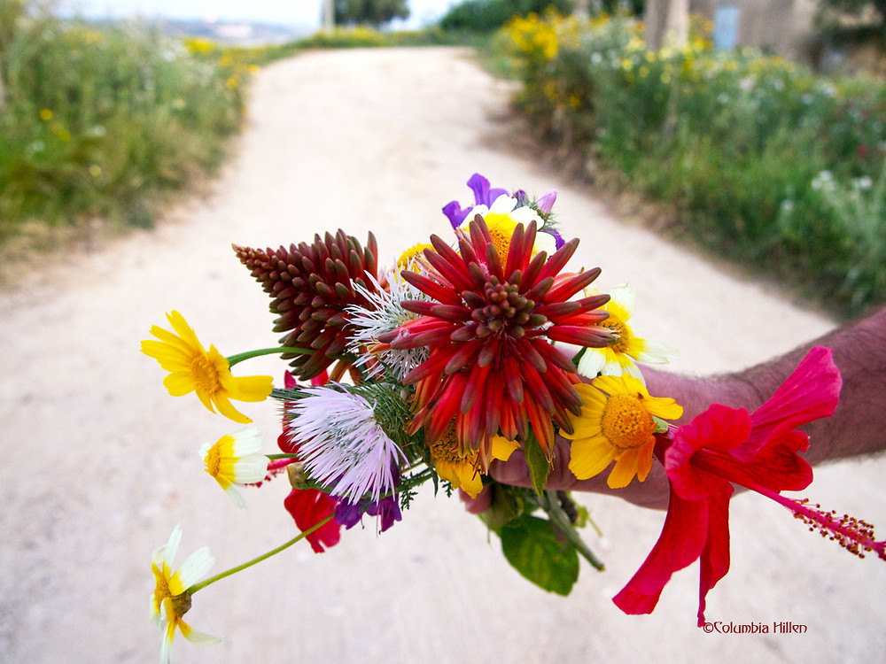 flowers of sicily photography, columbia hillen travel photography