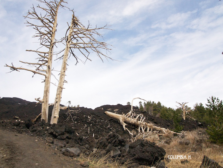 trees on mount etna, columbia hillen photography
