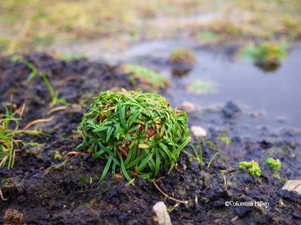 bogs of donegal, plants in the bog, columbia hillen photography
