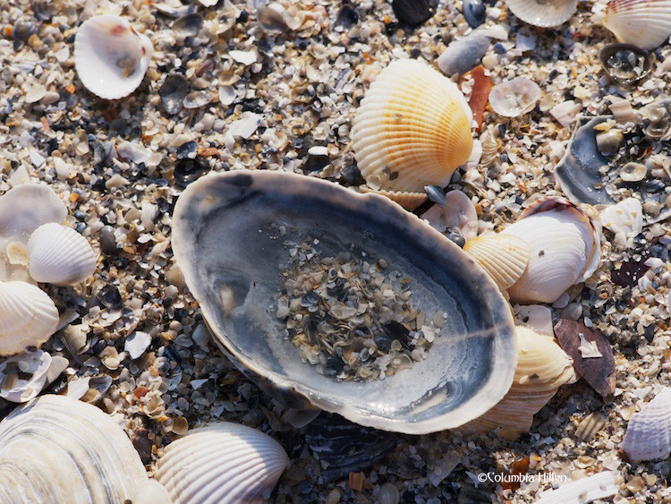 shells photo, donegal beaches, photography columbia hillen