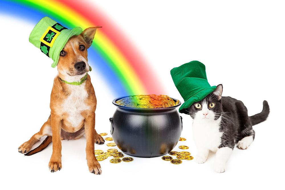 St. Patrick's Day offers, St. Patrick's Day Celebrations