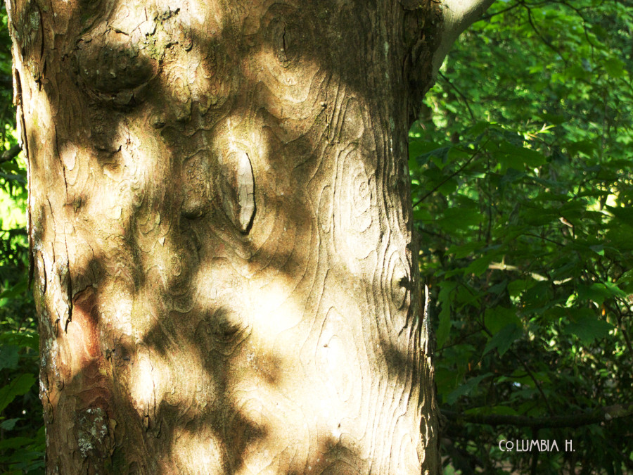 tree and shadows, columbia hillen photography
