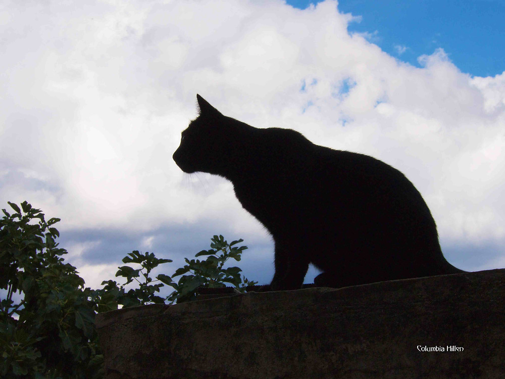 photography by Columbia Hillen, travel photography, photo of cat