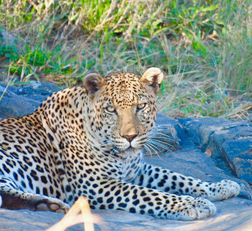Cruising Kruger National Park, South Africa, Part Three: Staring Down the Big Five; The Big, the Bad