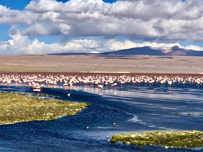 Flamingoes and Amigos in the Bolivia Altiplano