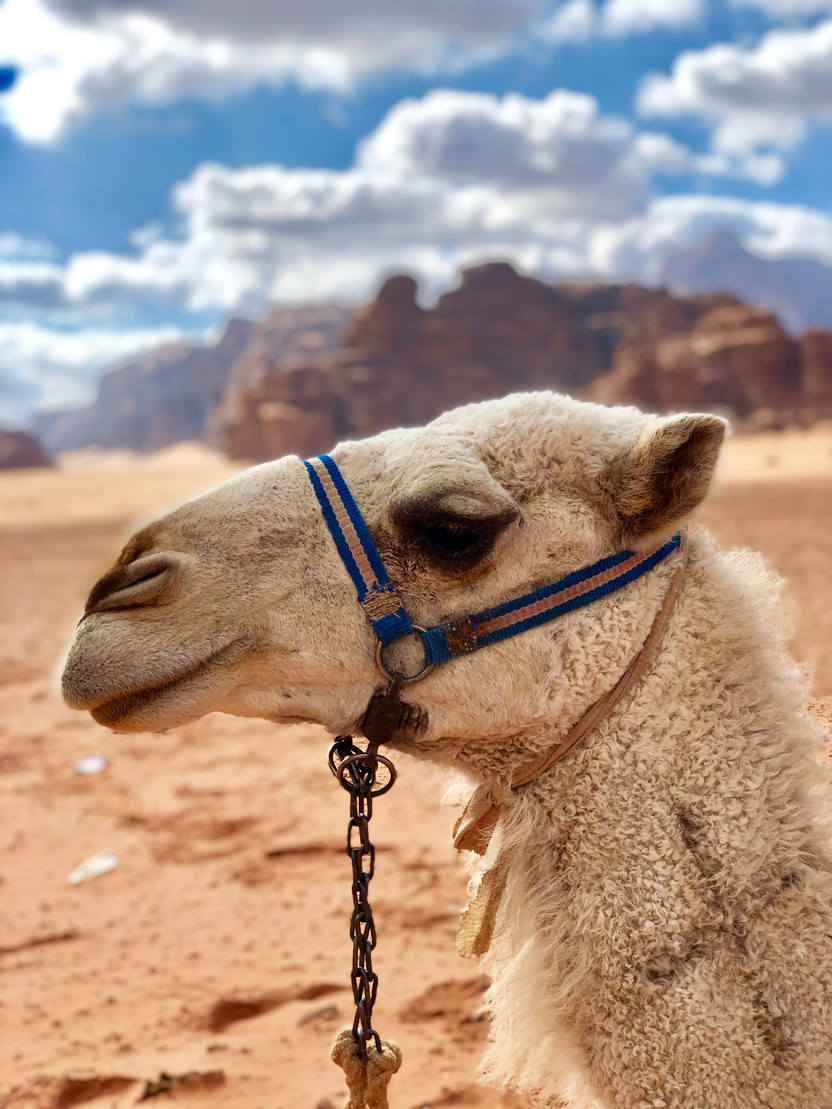 A Night in the Desert, Wadi Rum and Amman, Jordan