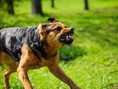 What to Do After a Dog Bite - The Most Important Steps