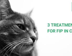 3 Leczenie zakaźnego zapalenia otrzewnej kotów u kotów