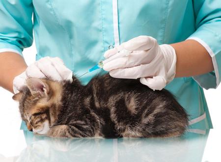 العلاجات المتاحة للعدوى FIP